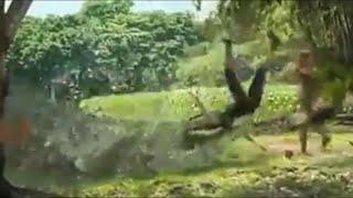 Alligator  eats woman,