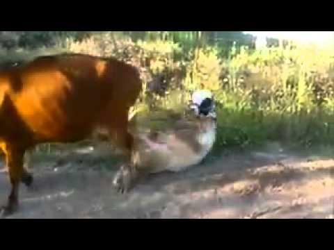 Kanga moko{laki c pesa} ft shozdie-mwiba free download video mp4.