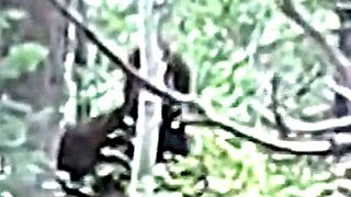 Elk Hunters Encounter Bigfoot - BREAKDOWN.