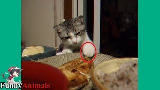 The Funniest and Most Humorous Cat Trying to Steal Fish - Funny Cats compilation