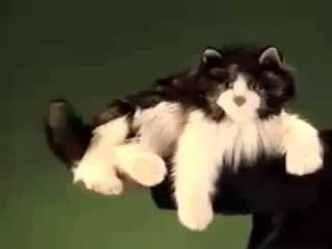 plyšová Kočka Ragdoll
