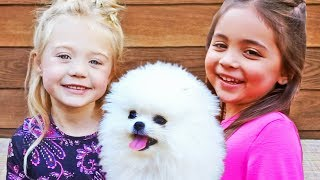 Tiny white micro teacup pomeranian puppy CARL LABRANT babysat & trained by Ever and Ava 4 years old