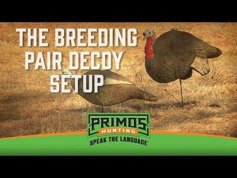 The Breeding Pair Decoy Setup video thumbnail