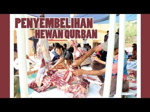 Luar Biasa !!! Penyembelihan Hewan Qurban dengan Golok Biasa (Pesantren Yatim Al-Hilal)