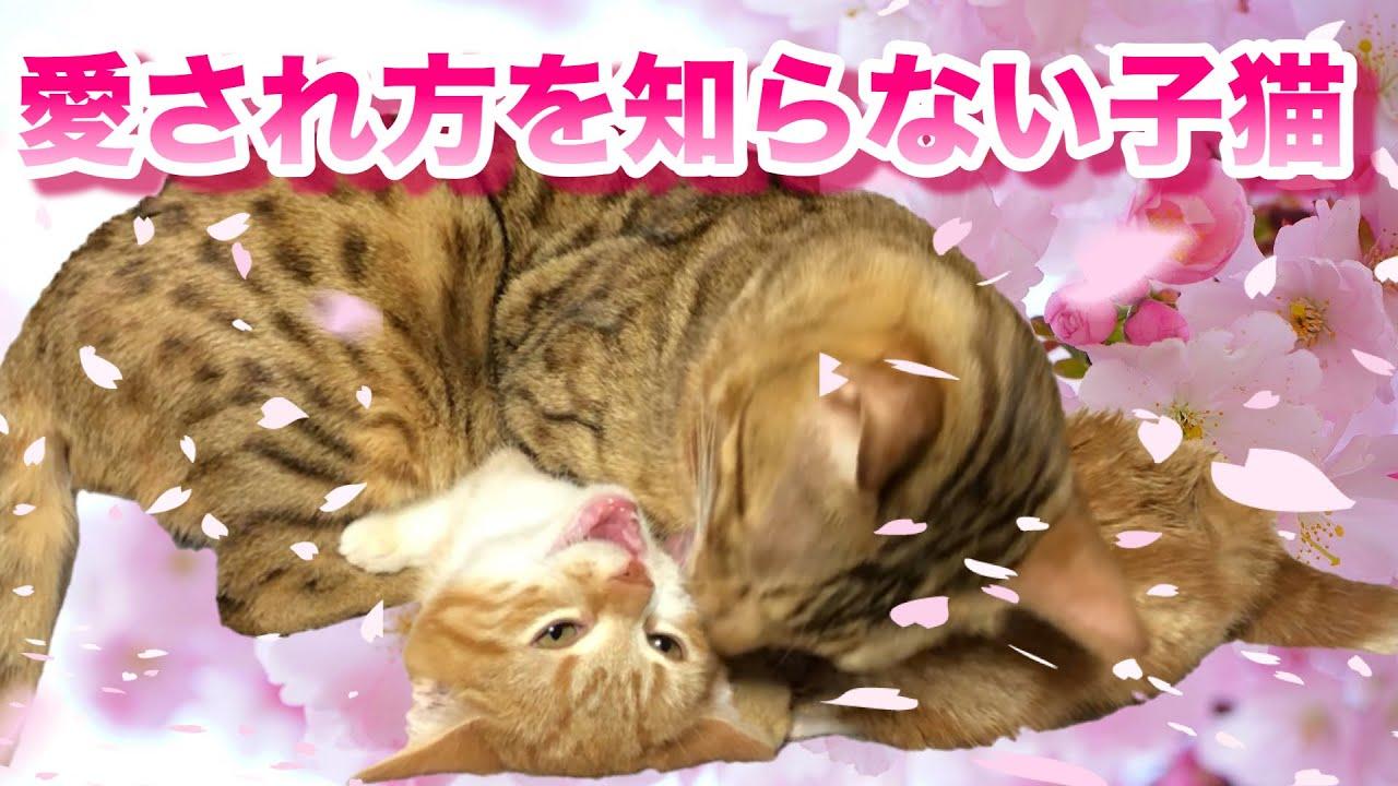 愛され方を知らない子猫と全部が優しさで出来た先住猫の話 #猫 #cat #子猫 #全部 #先住