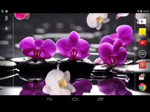 Video of Orchid Live Wallpaper