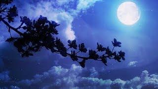 Relaxing Sleep Music - Peaceful Piano Music, Healing Music BGM