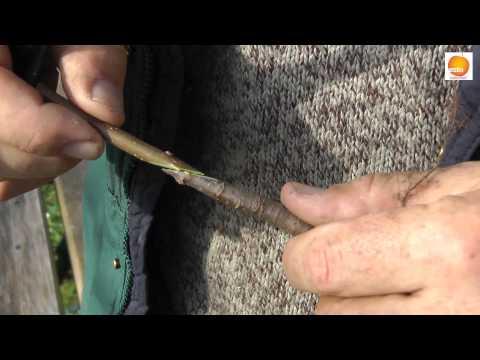Hogyan lehet megtisztítani a férgek pirula testét