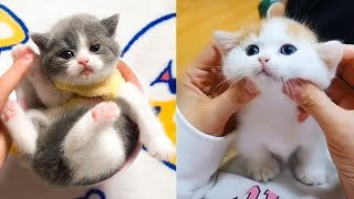 Baby Cats - Cute and Funny Cat Videos Compilation #23 | Aww Animals