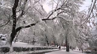 preview picture of video 'Virovitica - Gradski park gubi bitku pod teretom snijega'