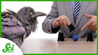 Can You Bamboozle Birds With Magic?