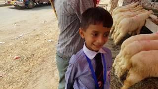 Sargodha Kajla Bhalwal Mandi rate for Bakra Eid 2019 Maal