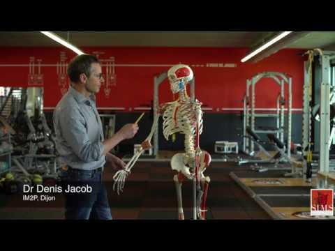 Les exercices pour les muscles de la vessie chez les femmes avec fitbolom pour