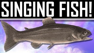 Watch Dogs - Singing Fish Easter Egg!