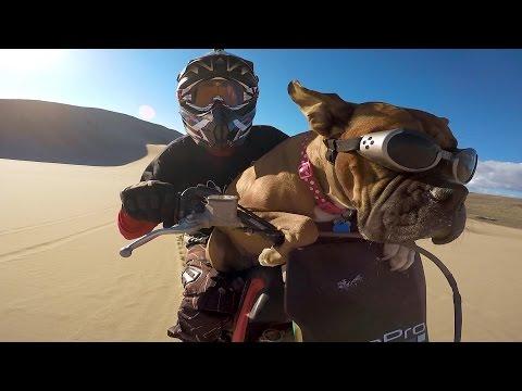 hqdefault - Este es el Lexus, el perro al que le va el motocross
