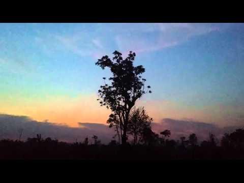 캄보디아 크섬 아침 새소리 Morning bird sound at Ksem, Cambodia