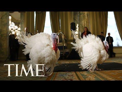 Turkey Pardon: President Trump Pardons National Thanksgiving Turkey In Annual Ritual | LIVE | TIME