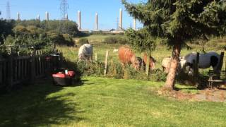preview picture of video 'Woodhorn Gardening Trip'