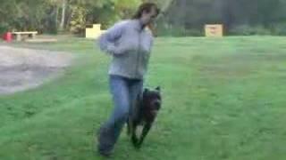 Выбор щенка Кане-Корсо