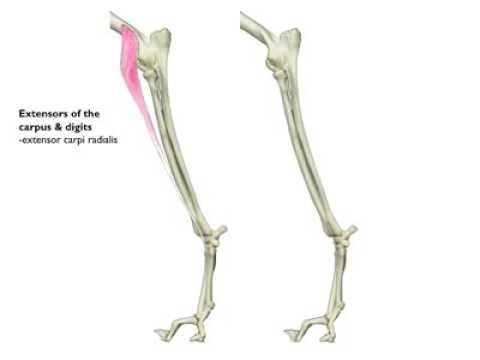 La gymnastique pour le renforcement des muscles du dos et le cou
