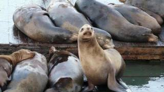 Sea Lion Saves Man Who Jumped Off Golden Gate Bridge