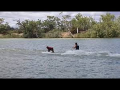 Talented dog water skis better than owner