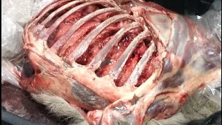 Deer Hunting Shot Placement: See a Whitetail Deer's Heart, Lungs and Liver