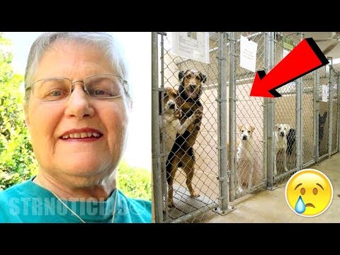 Mujer entra a la perrera y pregunta por el perro más viejo que nadie quiere ¡Mira quien sale!