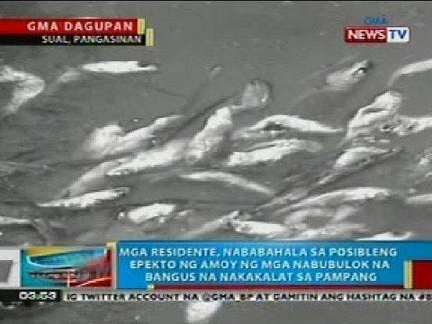 Pagtatasa ng mga parasito sa feces