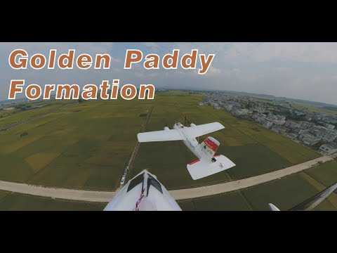 fpv-formation-chasing--over-golden-paddy--by-finwing-albabird