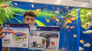 $20 Aquarium CHALLENGE! *With FISH*