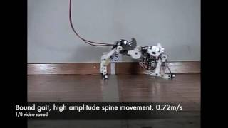 Bobcat robot, a bounding quadruped robot with an active spine.