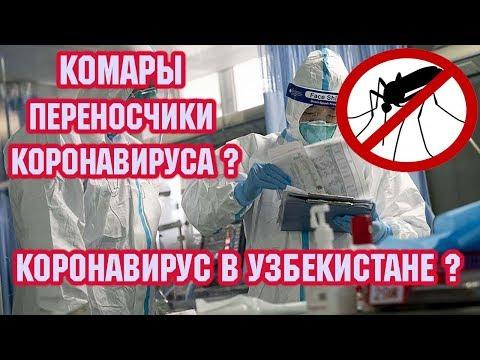 Комары переносчики КОРОНАВИРУСа ? Врач: нет подтверждения передачи КОРОНАВИРУСа через комаров