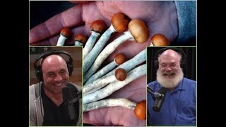 Joe Rogan And Dr. Andrew Weil   The Healing Benefits Of  Microdosing Psychedelics