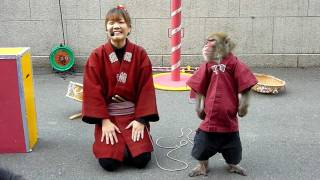 Monkeys show at Tokyo tower