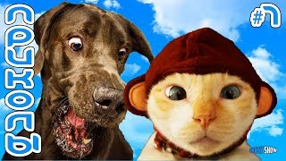 Смешные Коты и Кошки 2019   Приколы с Котами и Кошками 2019   Приколы с Животными #7