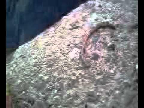 Parasito Peytchev Nikolai Video