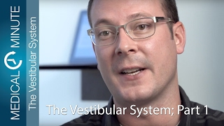 The Vestibular System – Part 1