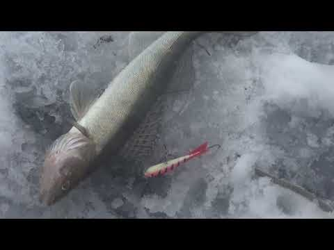 Рыбалка ЗИМОЙ В ЯКУТИИ