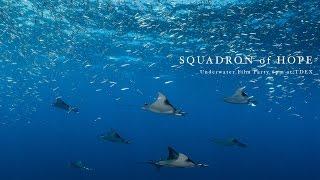 Squadron of Hope - Raja Ampat,Indonesia.