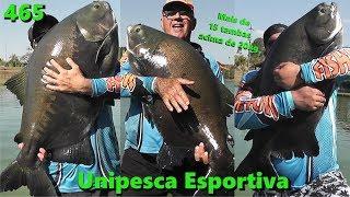 Muitos Tambas acima de 20kg no Unipesca - Fishingtur na TV 465