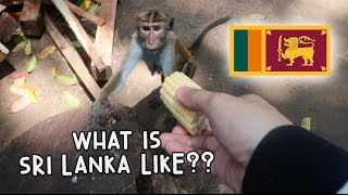 WHAT IS SRI LANKA LIKE? - MONKEYS GALORE! | Vlog #96