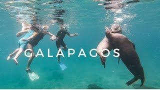 Vlog // Rose apprend à nager // Les incroyables Galapagos // Tortues // Lions de mer // Requins