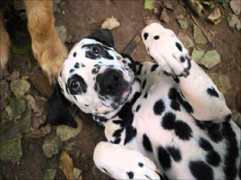 Hondendagopvang D'n Uutloat Oeffelt