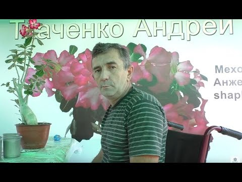 адениумы укоренение черенков