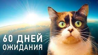 КУКИ В КОСМОСЕ - Трейлер