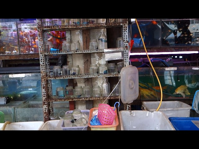 Incredible Fish Store Aquarium Shop in Asia
