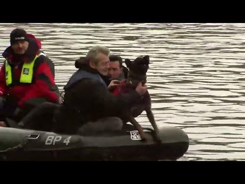 Partnersuche mit hund schweiz