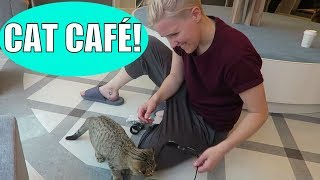What it's Actually Like at a Japanese Cat Café - Video Youtube