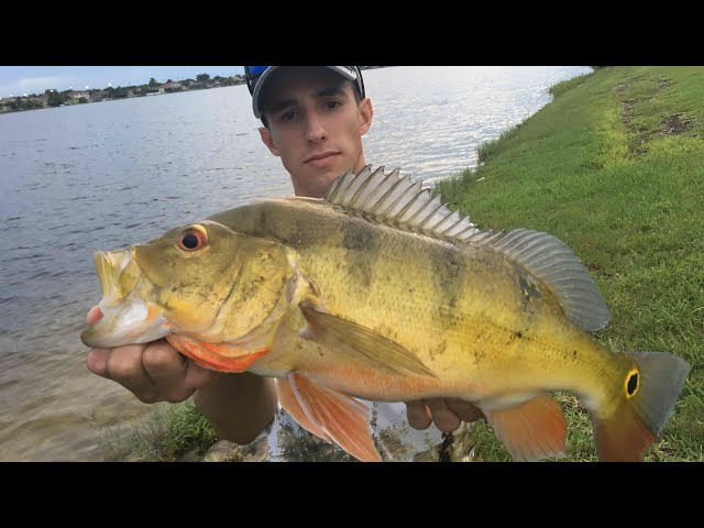 CATCH AND COOK PEACOCK BASS